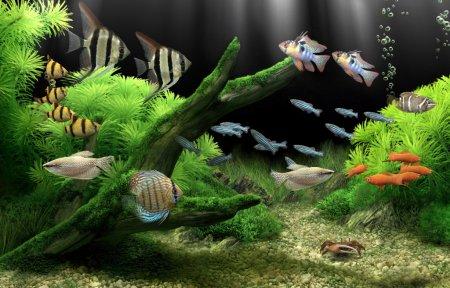 Dream Aquarium Screensaver + ключ - заставка аквариум